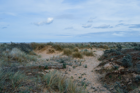 The Theedlethorpe nature reserve near Mablethorpe